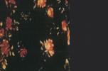 Blossom rose/black